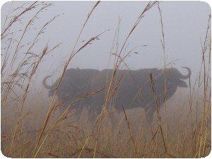 Parc de Nairobi (Nairobi, Kenya) sous la brume !