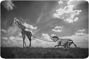 Thomas Subtil - Hakuna Matata - Safari Kenya 2