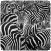 Le safari magique de Thomas Subtil ! » Thomas Subtil - Hakuna Matata - Safari Kenya 4