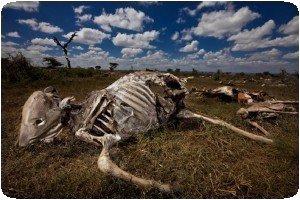 Brent Stirton - Pastoralism in Transition - Kenya/Southern Ethiopia