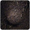 Les chauves-souris dans la cave de Suswa