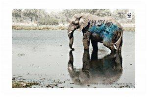 Un graffiti sur un élephant (Kenya)