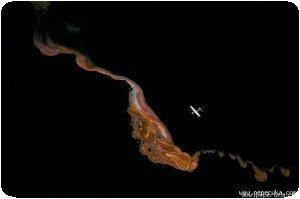 Vue aérienne de Magadi par Yann Arthus-Bertrand