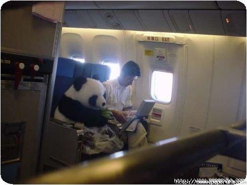 Un panda en 1ère classe
