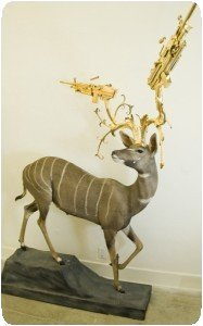 Peter Gronquist - Petit kudu