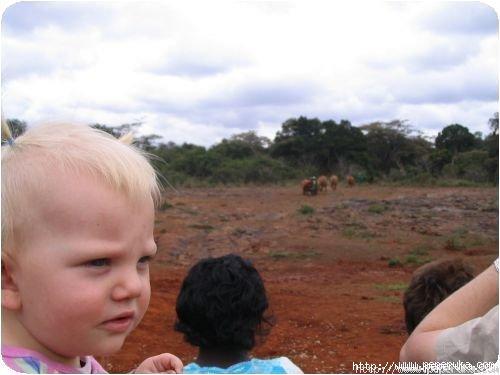 Océlia attendant l'arrivée des éléphanteaux