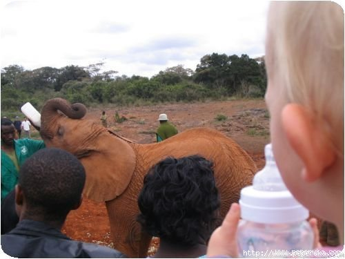 Océlia qui trinque avec l'éléphanteau