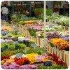 Rungis fleurs Kenya