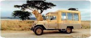 Safari (4)